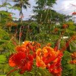 Photo de Dominica Botanic Gardens