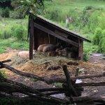 Quiet Valley Living Historical Farm Foto