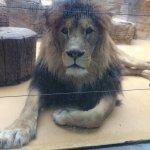 Olomouc Zoo Foto