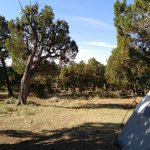 Flat shaded tent site