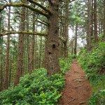 Ecola State Park path