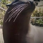 Pac Marine's statue of a sea lion