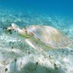Sea turtle!!!