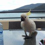 Foto de Pinnacles Resort