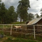 Elk Point Lodge & Cabins Foto