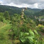 Jardin Et Objets Des Panrees