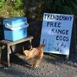 Foto de Trenderway Farm