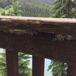Emerald Lake Lodge Foto