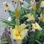 Pause digestive au jardin fleuri