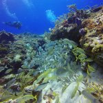 This is what diving in Cozumel is like!