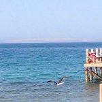 Photo de Zeytuna Beach