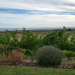 Photo de Seven Quails Vineyards Bed & Breakfast