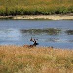 Foto de Wildlife Prairie Park