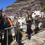 Photo de Donkey ride