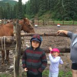 Kids petting the horses