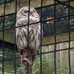 Photo de Zoo Ecomuseum