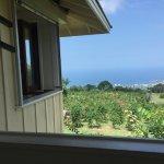Foto di UCC Hawaii Kona Coffee Estate