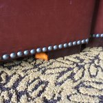 Our room was dusty and had some dirty areas. There was a cheeto stuck to the foot of our ottoman