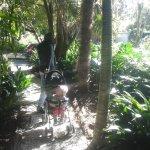 Path into gardens