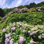 Photo de Katahara Tourist Association
