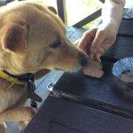 鹿肉を食べる愛犬チャロ