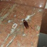 Kakerlaken im Bad