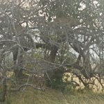 Photo de Akagera National Park