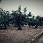 Photo de Masseria Fontanelle