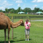 You can feed the camels