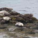 Zeehonden in je achtertuin