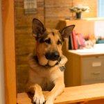 Der Haushund Malcolm