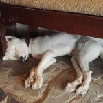 Sleeping Coco