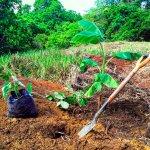 Travail pour la reforestation avec la permacuture