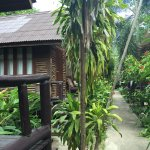 Photo of Banana Garden Home