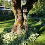 Willow-Witt Ranch's caretakers' lawn with rustic wooden birdhouse on pole