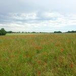 Gué de Ray farmland landscape