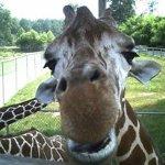 Photo of Metro Richmond Zoo