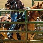 Rodeo in Tucson