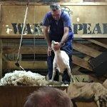 Foto de Walter Peak High Country Farm