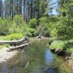 Taylor Creek, Lake Tahoe, Ca