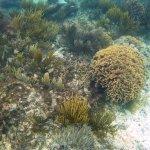 Haciendo snorkel en los arrecifes de Tulum