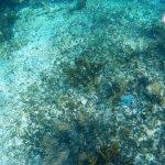 Hermosos peces de colores acompañan el snorkel