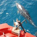 Um Delfine zu sehen braucht man viel Glück? Naja, hier reicht eine viertel Stunde auf dem Boot!