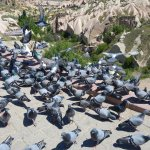 Photo de Pigeon Valley