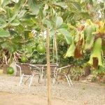Hacienda Combia Photo