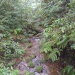 Photo of Reserva Bosque Nuboso Santa Elena