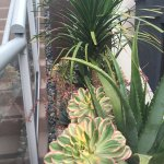 Pretty succulents near walkways