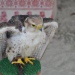 Oiseau dans un enclos au décor