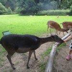 children feeding the deer.