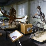 Skeletons from animals that roamed the Idaho area.